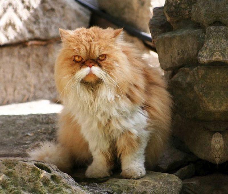 http://bigpicture.ru/wp-content/uploads/2014/01/animalswmustache01.jpg