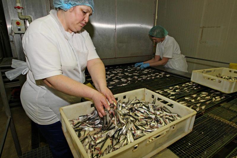 5. В настоящее время в РФ снижены допустимые нормы бензапирена (вещество, вырабатывающееся при копчении) в подобной продукции. Поэтому многие производители изготавливают  «шпроты» путём простого консервирования рыбы в масле с добавкой «жидкий дым».