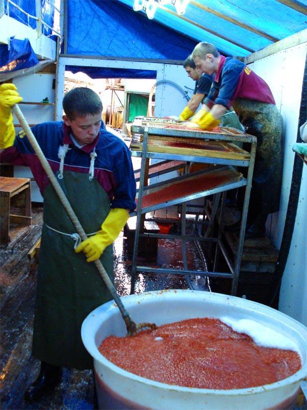 caviar07 Как делают красную икру