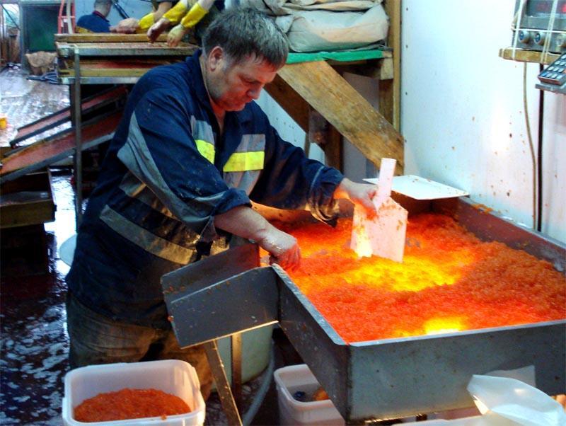 caviar09 Как делают красную икру