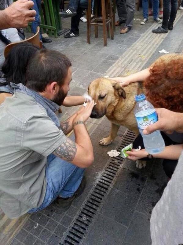 30. Демонстранты промывают глаза собаке, пострадавшей от слезоточивого газа, в Анкаре, 2013 год.