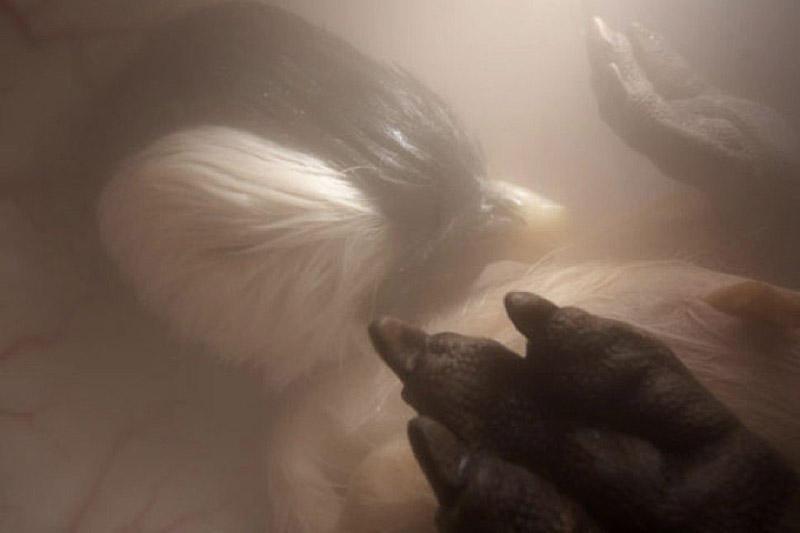 inutero11 Как выглядят животные в утробе матери
