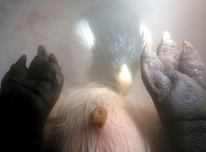 inutero12 Как выглядят животные в утробе матери