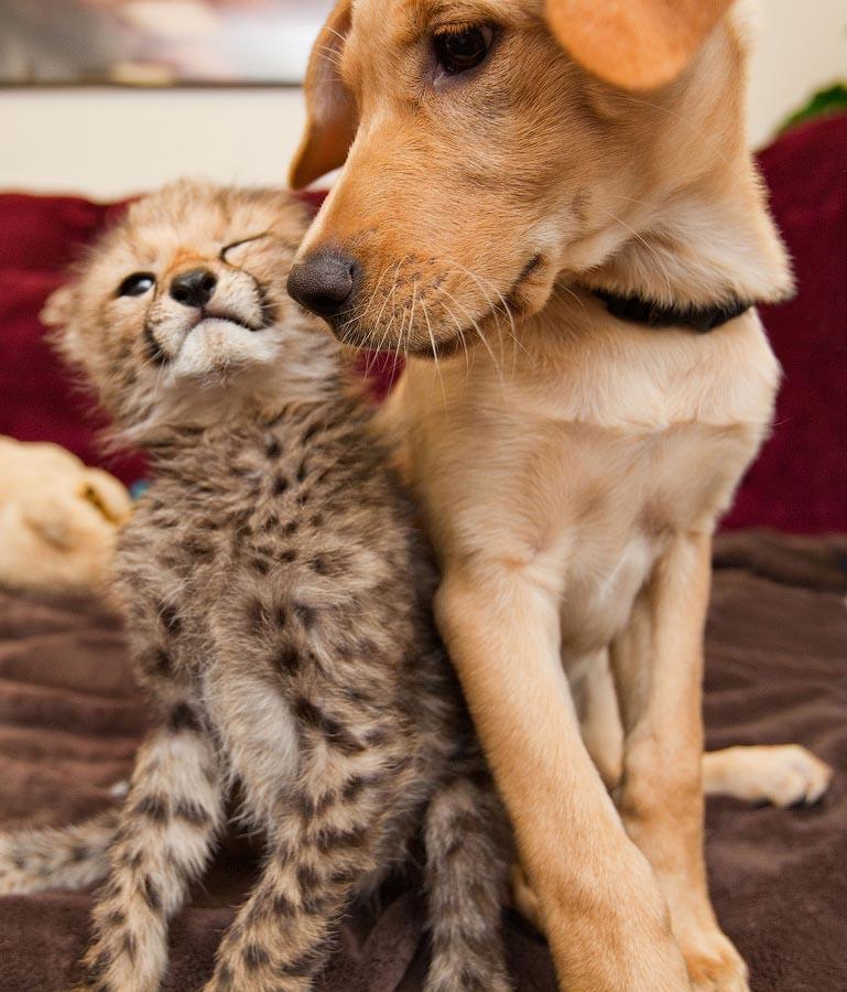 Картинки кошек и собак вместе, английском пишется открытка