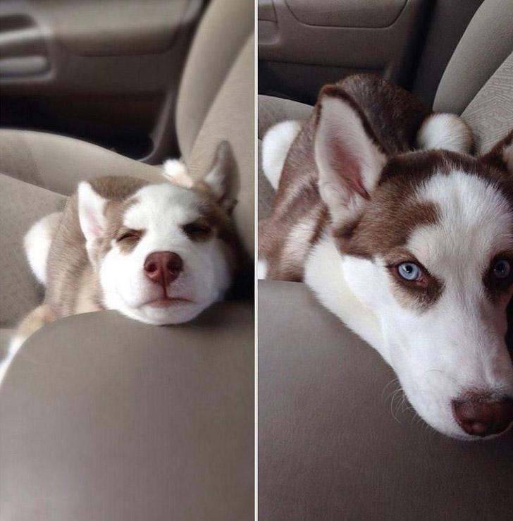 GrowingUp04 Наши любимые животные: фото до и после взросления