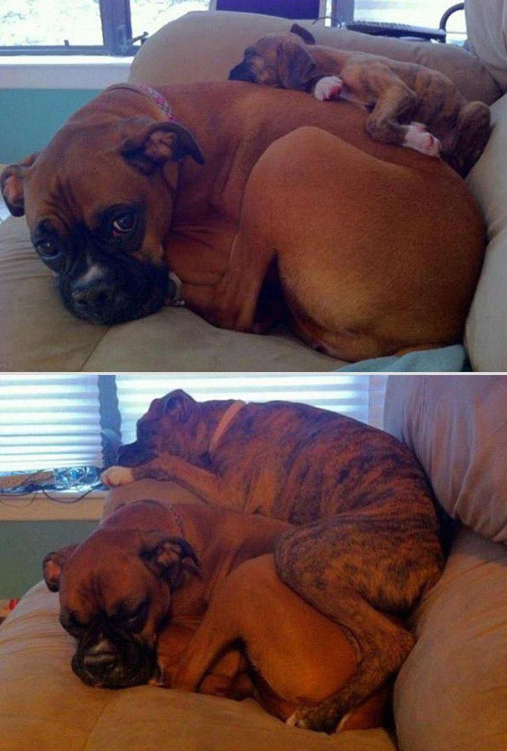 GrowingUp12 Наши любимые животные: фото до и после взросления