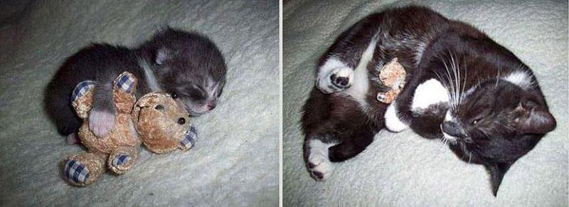 GrowingUp13 Наши любимые животные: фото до и после взросления