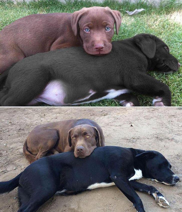 GrowingUp17 Наши любимые животные: фото до и после взросления