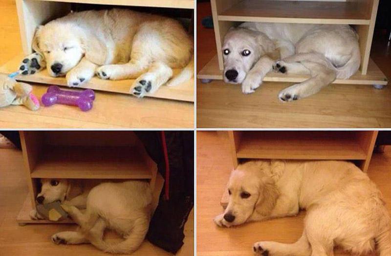 GrowingUp18 Наши любимые животные: фото до и после взросления