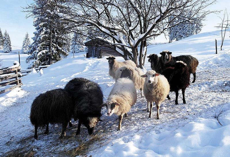 Hutsuls26 В гостях у гуцулов: усадьба украинских горцев