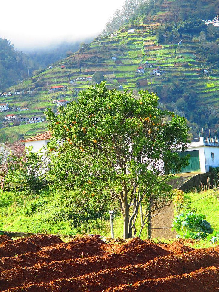 Madeirawalk09 Мадейра. Прогулка из Сантаны в Фуншал