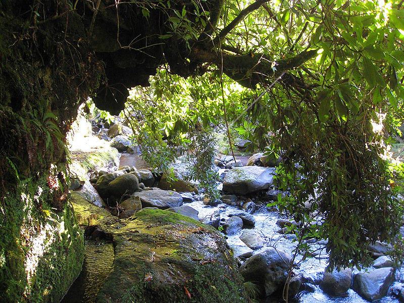 Madeirawalk17 Мадейра. Прогулка из Сантаны в Фуншал