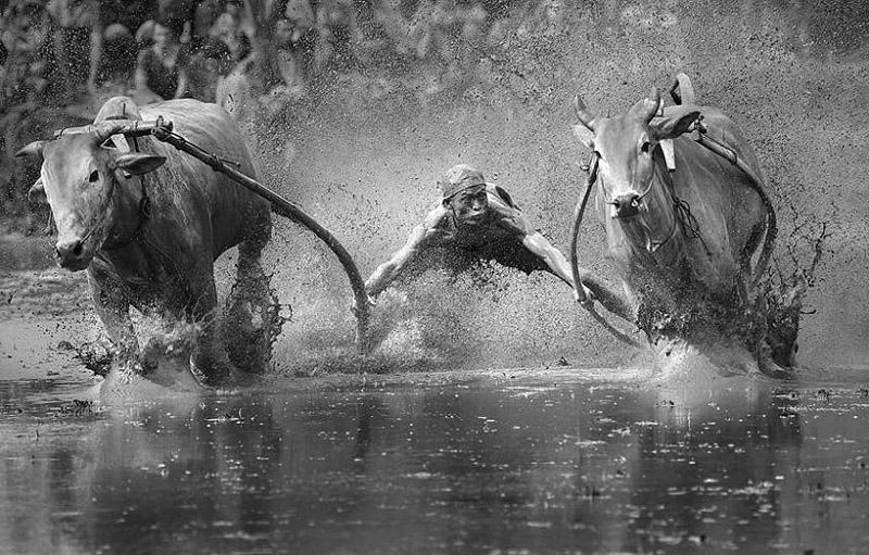 SonyWorldPhoto29 Финалисты фотоконкурса Sony World Photography Awards 2014