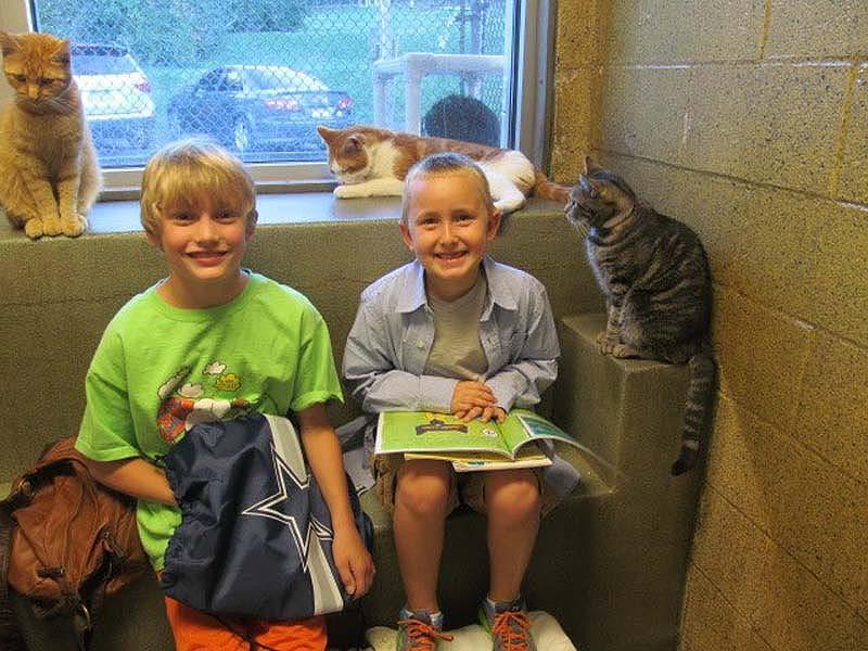 bookbuddies101 Дети учатся читать, а коты им помогают