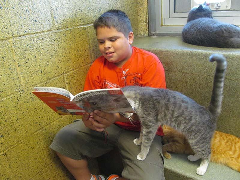 bookbuddies111 Дети учатся читать, а коты им помогают
