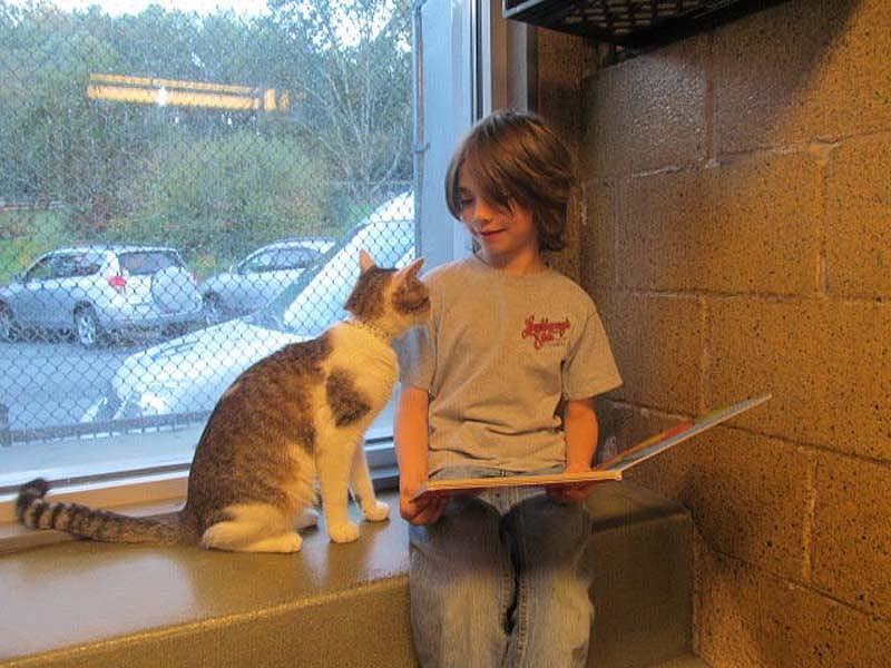 bookbuddies121 Дети учатся читать, а коты им помогают