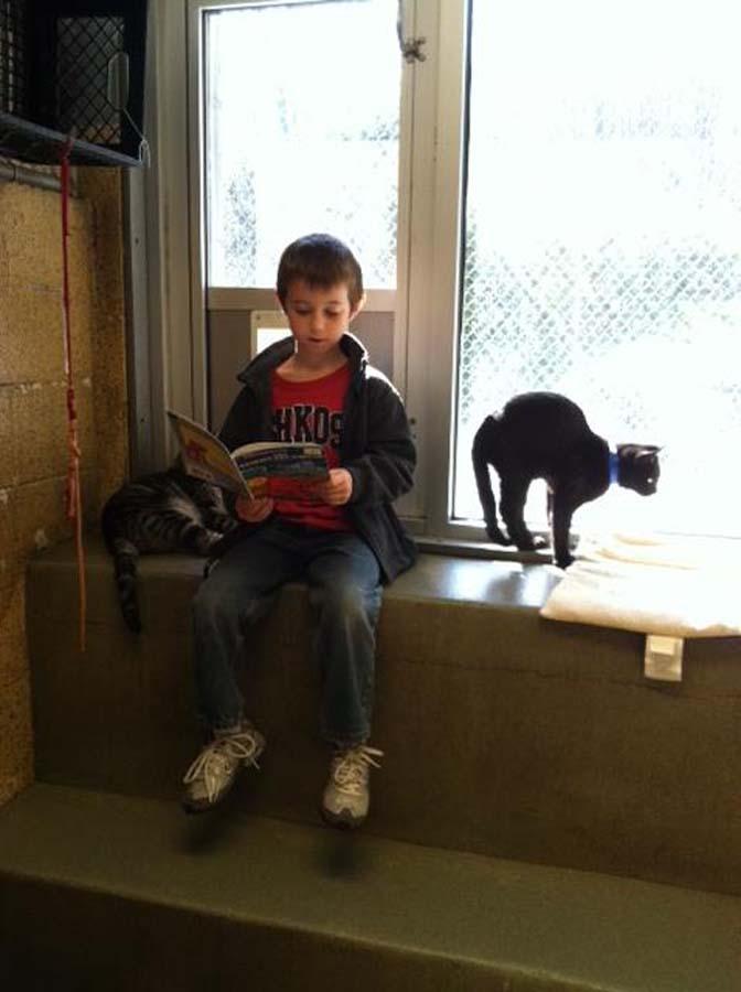 bookbuddies131 Дети учатся читать, а коты им помогают