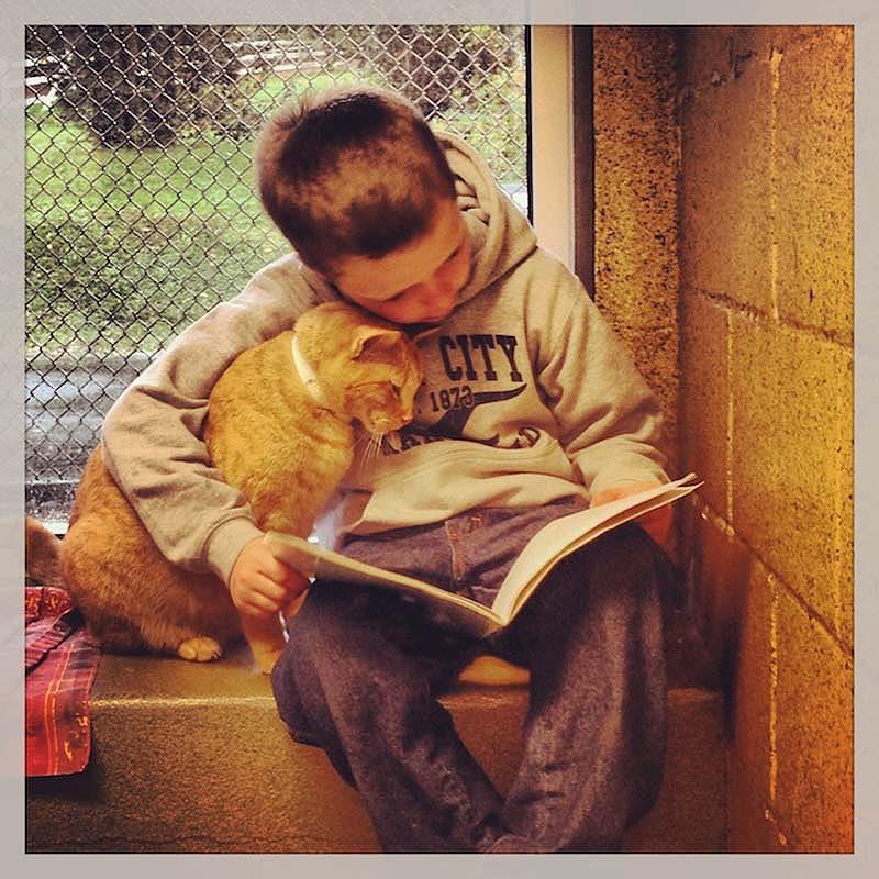 bookbuddies14 Дети учатся читать, а коты им помогают