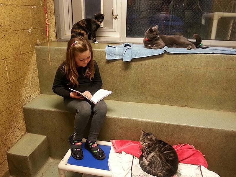 bookbuddies31 Дети учатся читать, а коты им помогают