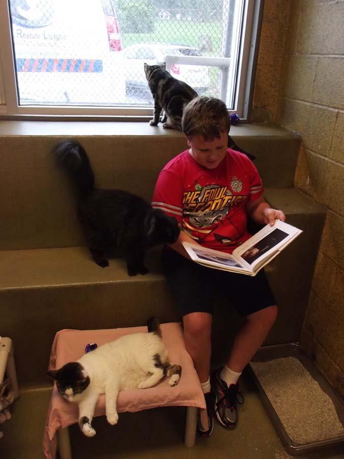 bookbuddies41 Дети учатся читать, а коты им помогают