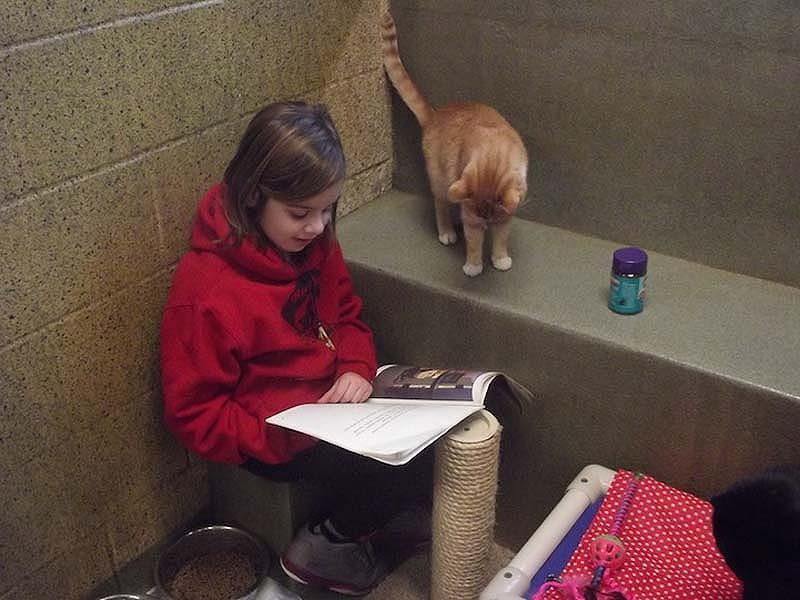 bookbuddies51 Дети учатся читать, а коты им помогают