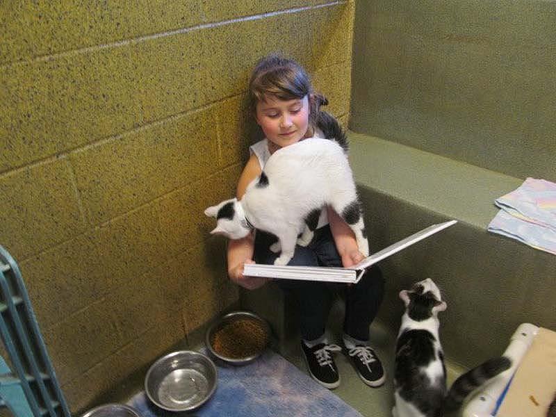bookbuddies81 Дети учатся читать, а коты им помогают