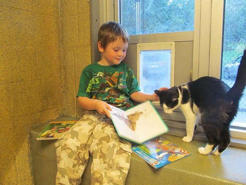 bookbuddies91 Дети учатся читать, а коты им помогают
