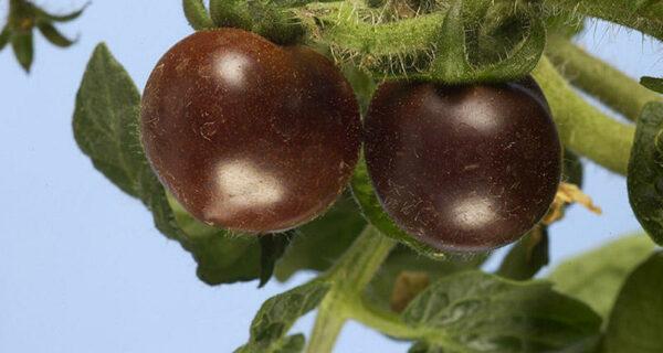 7 ГМО-продуктов, которые вынесут ваммозг