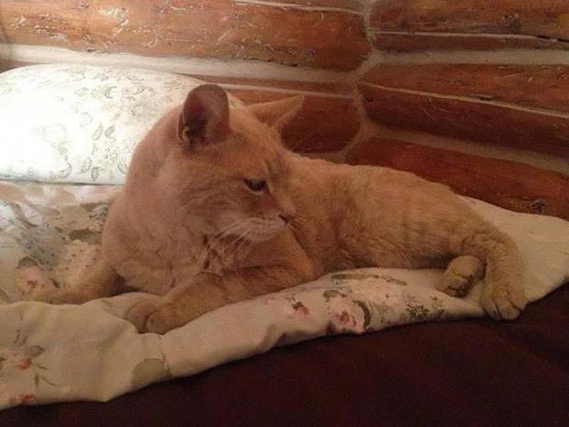 slujebniekoti 10 Служебные коты