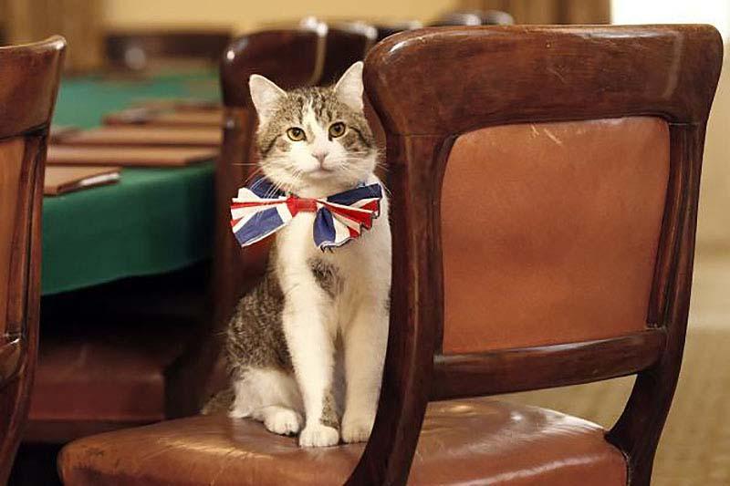 slujebniekoti 11 Служебные коты