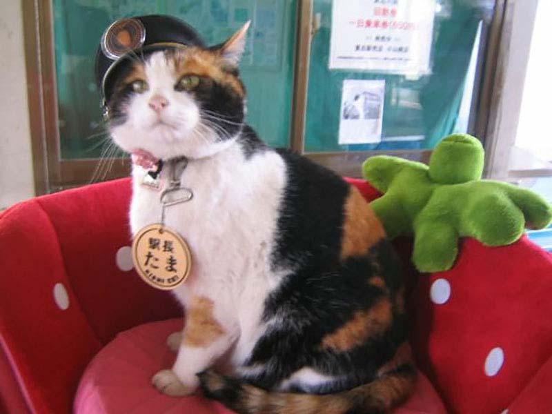 slujebniekoti 12 Служебные коты