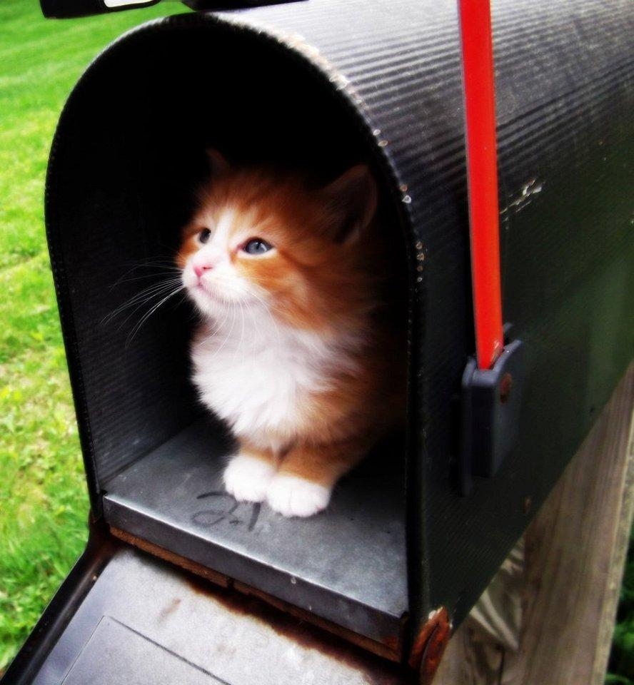 slujebniekoti 5 Служебные коты