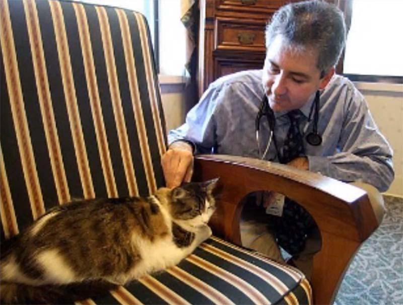 slujebniekoti 8 Служебные коты