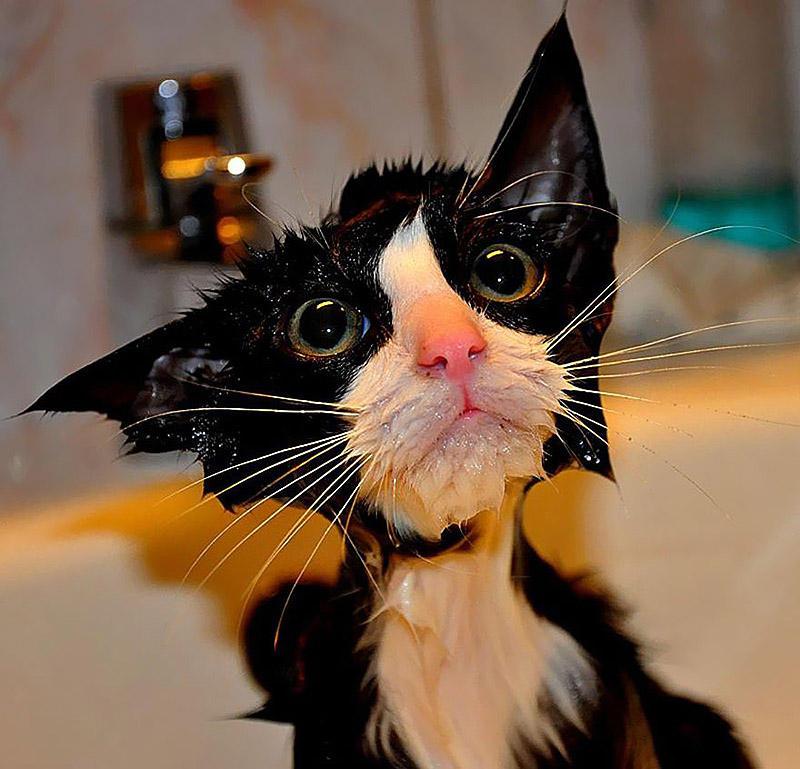 wetcats01 Невероятно забавные фото мокрых котиков