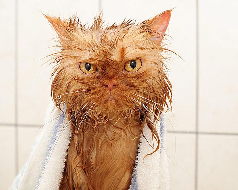 wetcats07 Невероятно забавные фото мокрых котиков