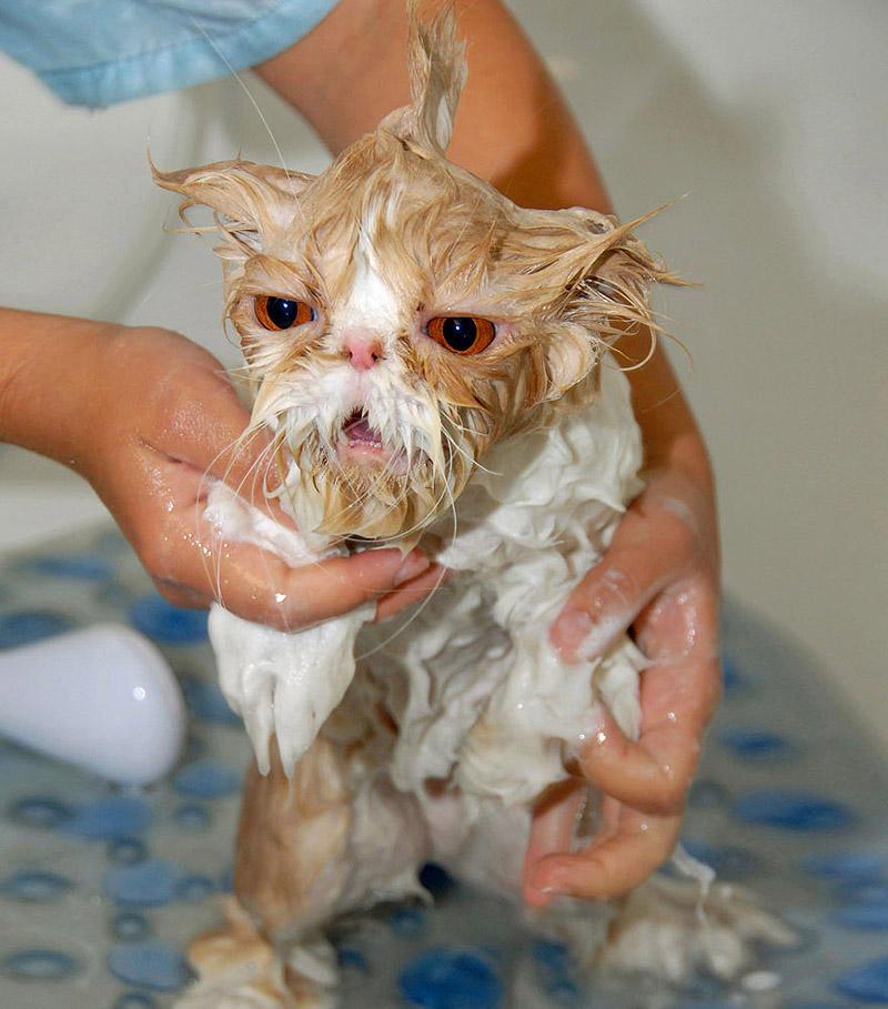 wetcats12 Невероятно забавные фото мокрых котиков