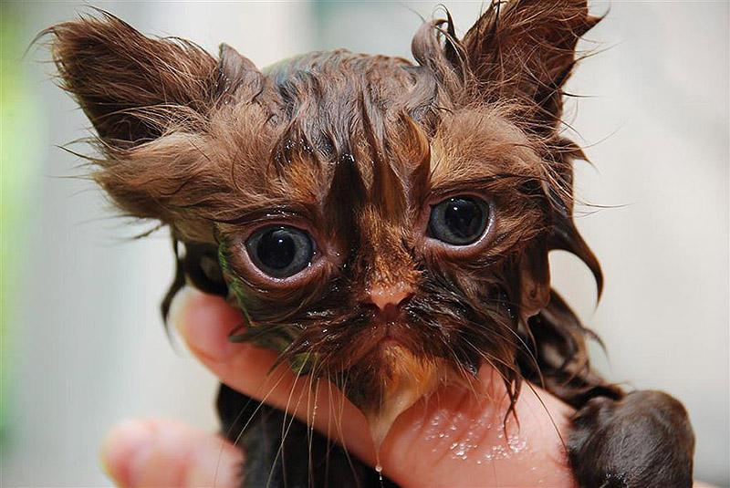 wetcats13 Невероятно забавные фото мокрых котиков