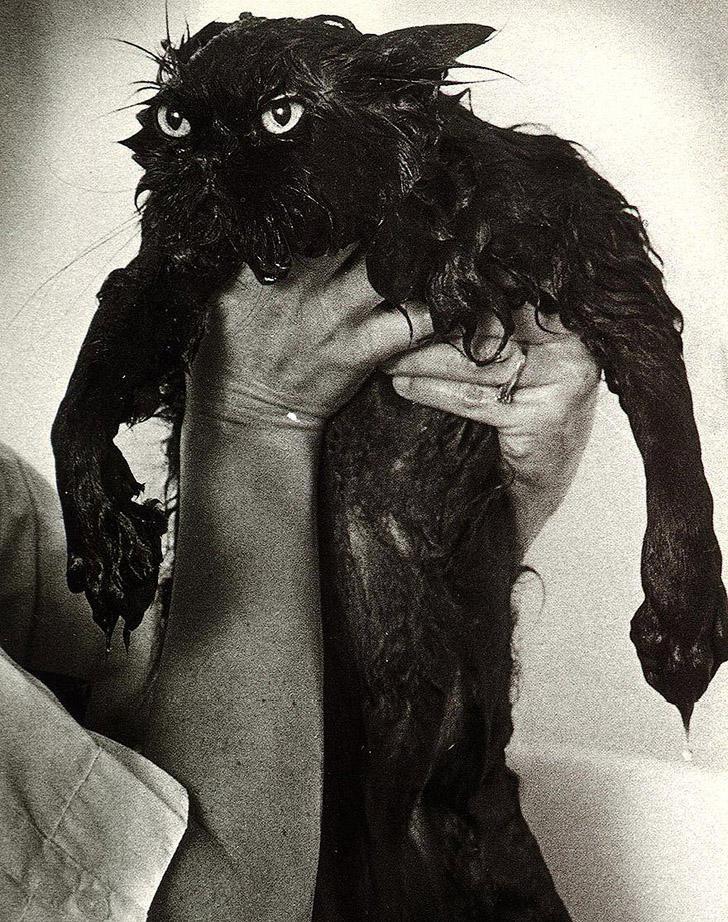 wetcats14 1 Невероятно забавные фото мокрых котиков