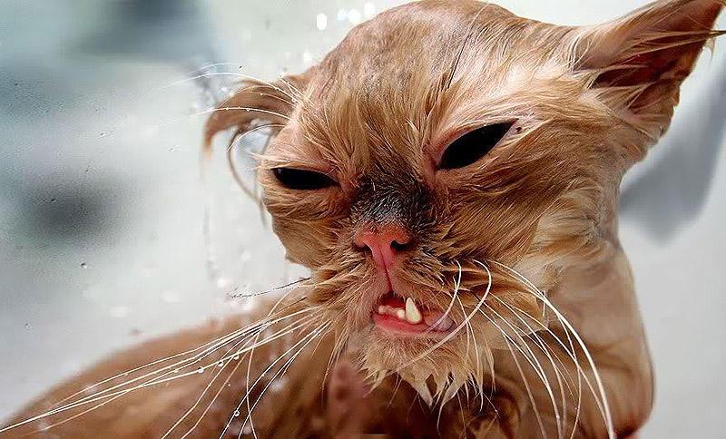 певица бывшая мокрые кошки смешные фото название