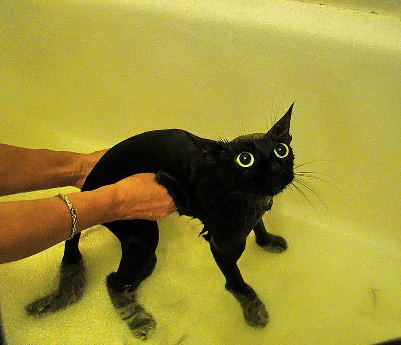 wetcats16 Невероятно забавные фото мокрых котиков