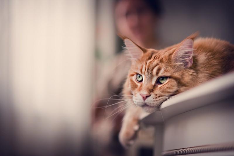 22581 1000 Мегапозитив: Веселая история о дрессуре котиков и их хозяев