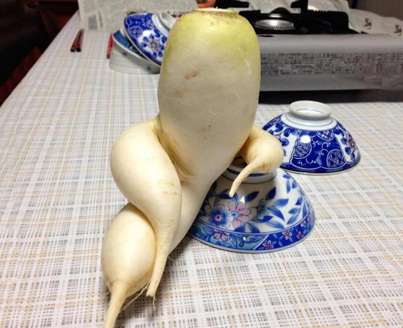2879695 Вальяжная редька и другие фрукты овощи, забывшие, что они растения