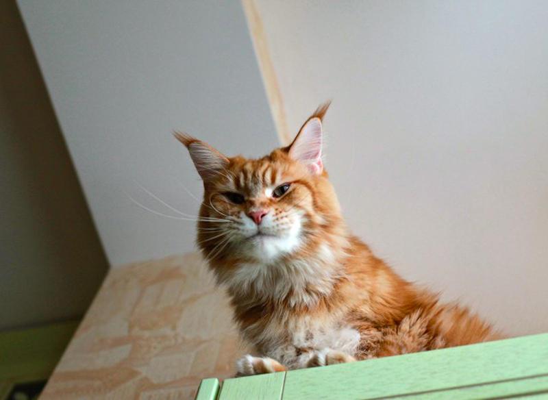3065 640 Мегапозитив: Веселая история о дрессуре котиков и их хозяев