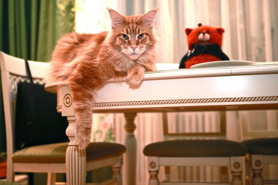46850 900 Мегапозитив: Веселая история о дрессуре котиков и их хозяев