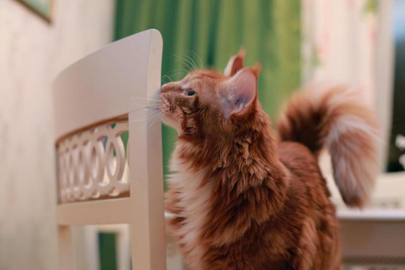 66776 600 Мегапозитив: Веселая история о дрессуре котиков и их хозяев