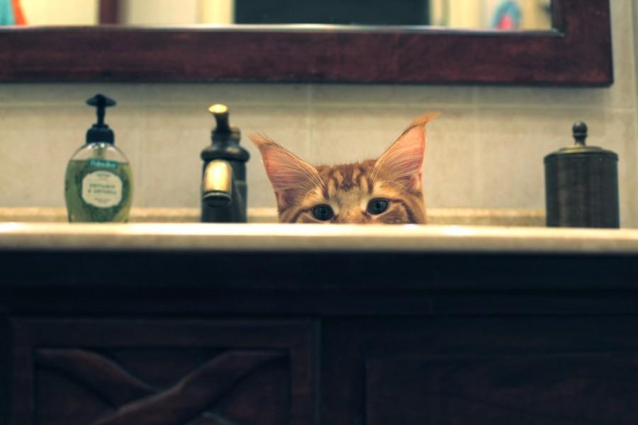 72530 900 Мегапозитив: Веселая история о дрессуре котиков и их хозяев