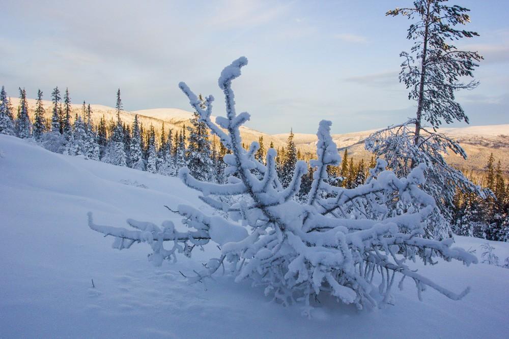 сэкономить картинки к суровой зиме тундры нижнюю шаровую