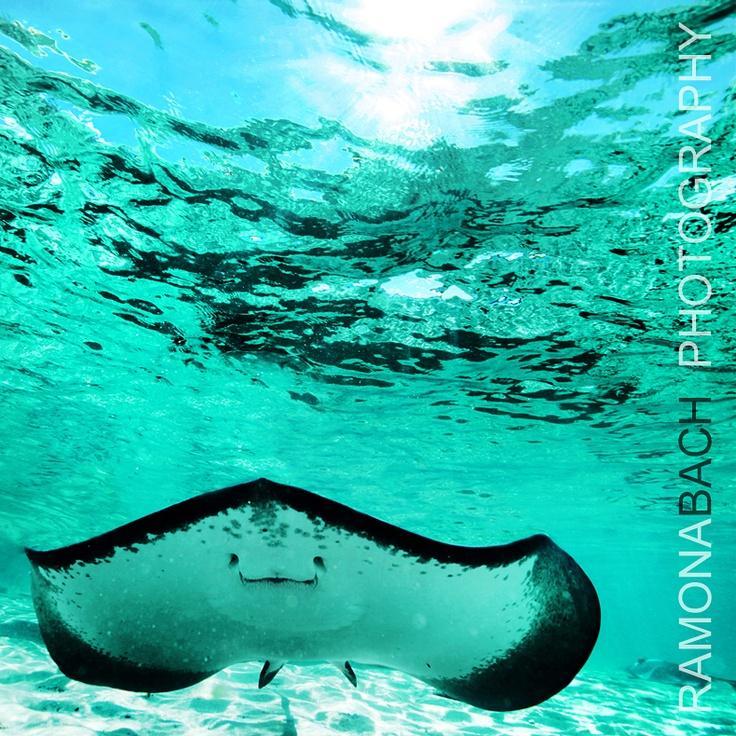 Snorkeling18 25 лучших мест для сноркелинга