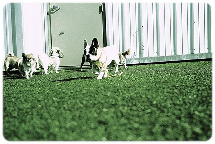 WagHotel01 5 звездочный отель для собак