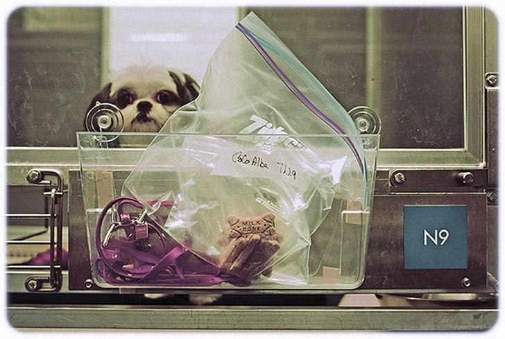 WagHotel02 5 звездочный отель для собак